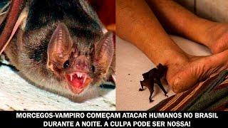 Morcegos-Vampiro começam atacar humanos no Brasil durante a noite. A culpa pode ser nossa!