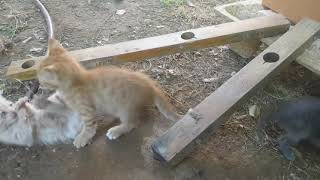 Kittens playing in the garden!
