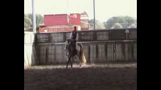 cavalo ruco Quim Ze Salvador