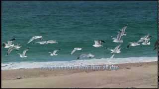 Flocks of Seagulls With Relaxing Ocean Sounds