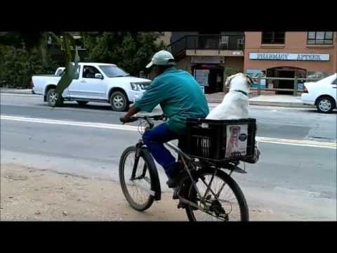 Day 10 -11: Coast to Coast South Africa on Dahon folding bikes.wmv