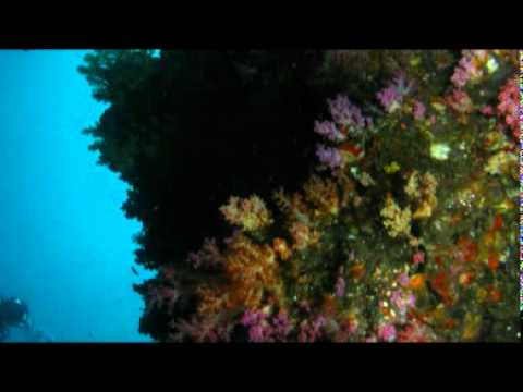 Sodwana Diving – South Africa Travel Channel 24