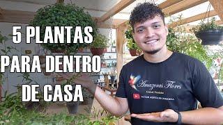 5 PLANTAS PARA DENTRO DE CASA + Dicas de Jardinagem | Amazonas Flores