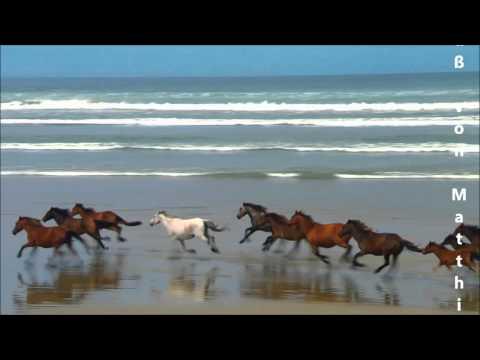Wilde Pferde de Matthias Reim Letra y Video