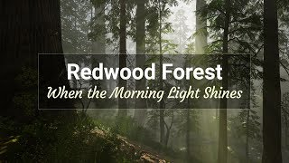 Redwood Forest - When the Morning Light Shines | A Project in Unreal Engine Using Blender