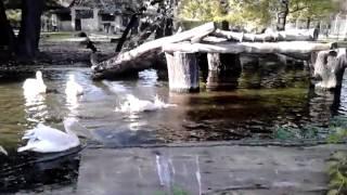 Behinderter Pelikan im Zoo Leipzig!!!