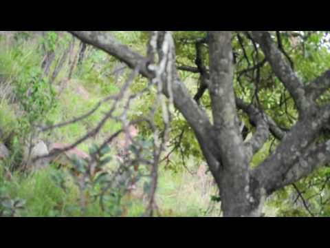 Elephant Encounter, Shibula Lodge, South Africa