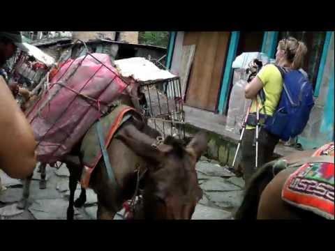 Mule Train through Naya Pul, Nepal