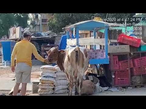 feeding strays bangalore