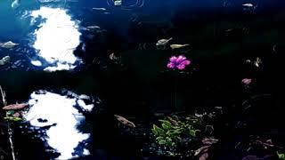 Galvanic - Pretty Baby (ft. Shiloh) 🌸