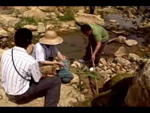 小水草的大世界─台灣的水生植物 - YouTube