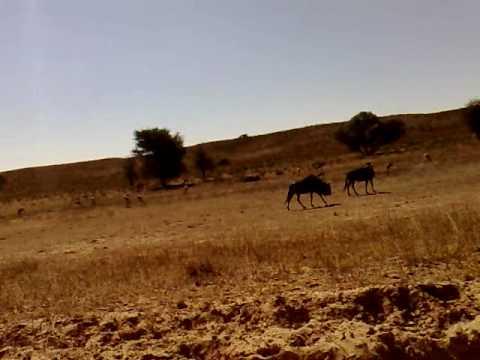 Kgalagadi Transfrontier Park , Sudafrica. Part 1.