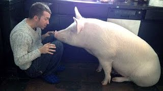 This Couple Thought They Adopted A Mini Pig, But It Grew Up Into