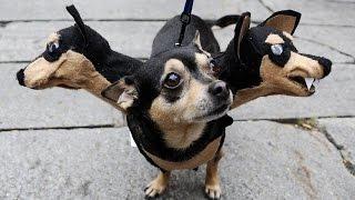 Os cachorros mais engraçados pra você chorar de rir