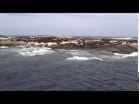 [衛斯理TV] 搭船前往開普敦外海的一座被海豹佔據的小島