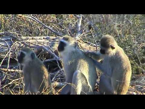 Monkeyworld – Kruger NP, South Africa
