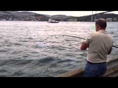 Bogazda capariyle cinekop avi