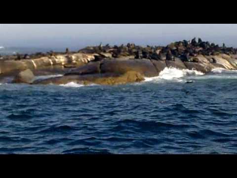 Seal Island / La Isla de las Focas