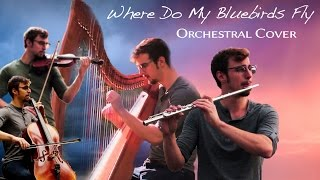 Tallest Man On Earth - Where Do My Bluebirds Fly Orchestral Cover