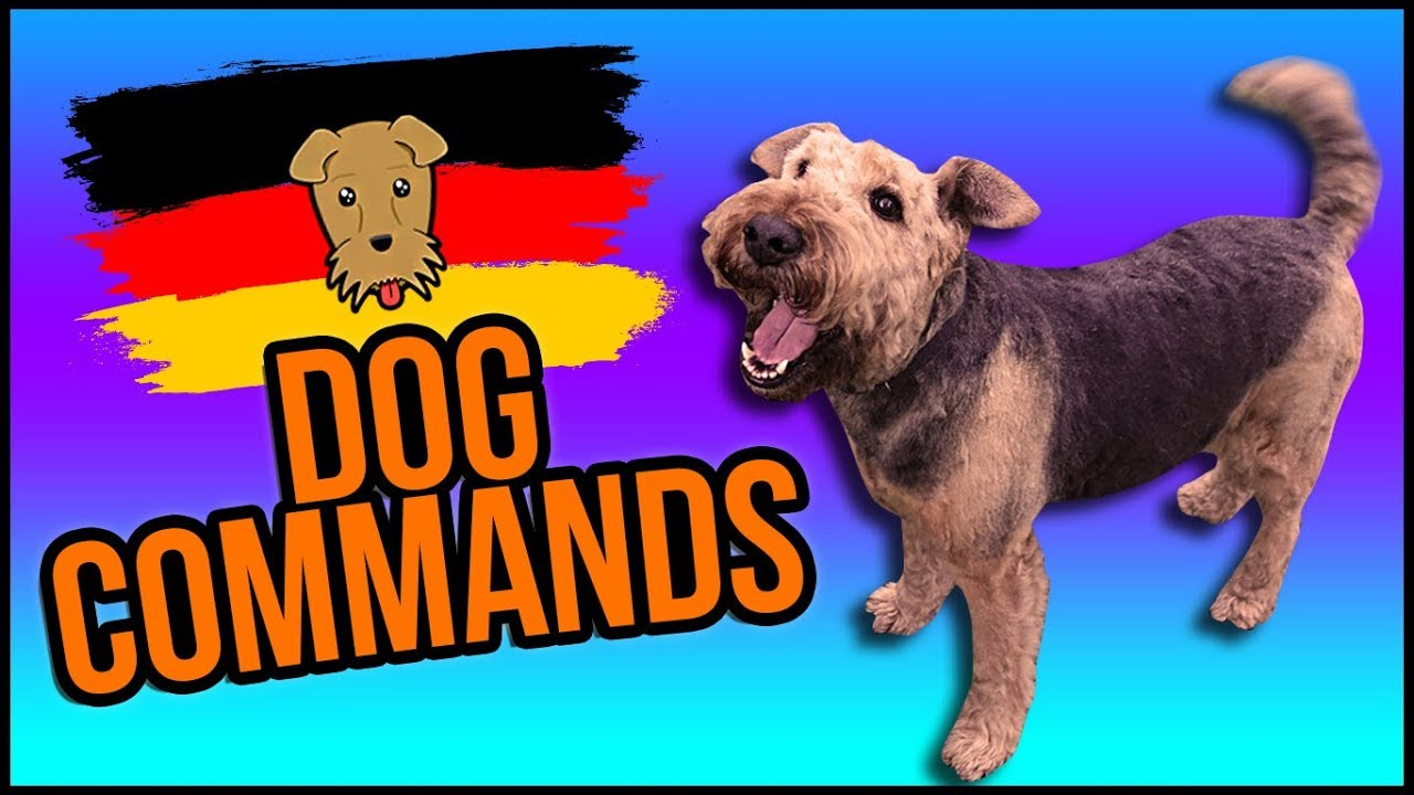 Dog Training Commands in German