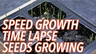 Teaser - Plant Seeds Time-lapse Photography Time Lapse Video - Speed Growing