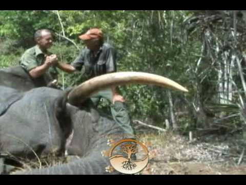 Hunting Africa Safari – Hunting Africa