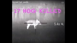 Termovize PULSAR Trail - lov 17x divočák - Thermal Hog Hunting - охота на диких кабанов