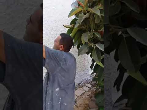 סרטון: צביעה חיצונית לבית פרטי