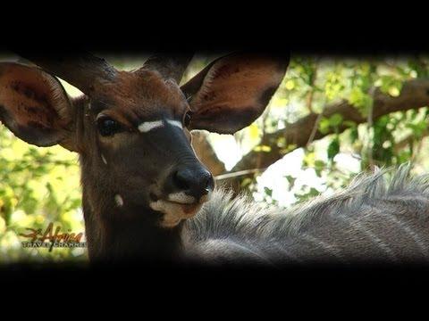 Ubizane Wildlife Reserve Hluhluwe South Africa – Visit Africa Travel Channel