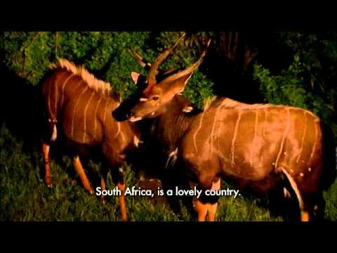 South Africa Tourism Video -On safari
