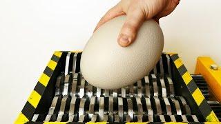 SHREDDING OSTRICH EGG - EXPERIMENT AT HOME