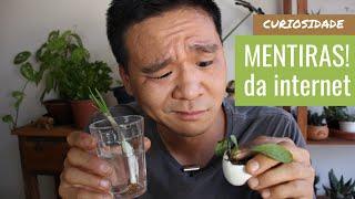 4 Mentiras de jardinagem que a internet te mostra.