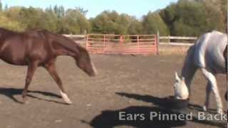 Dominance Hierarchies in Horses