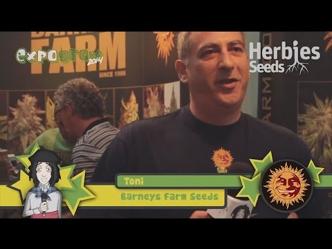 Barney's Farm @ Expo Grow 2014 (ESP)