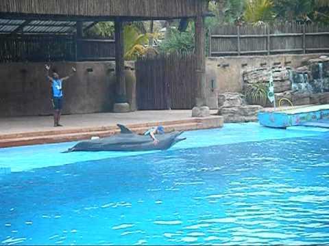 Dolphin Show at uShaka Sea World