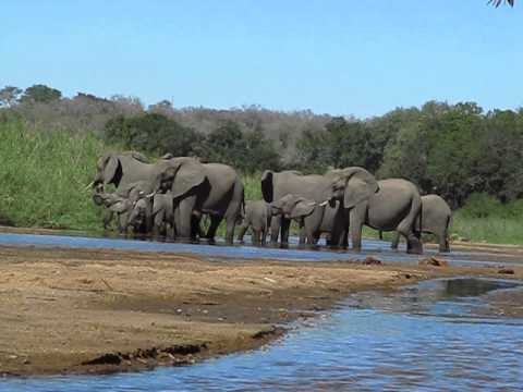 Elephants at ground level, RiverBank Kirkman's Camp, South Africa