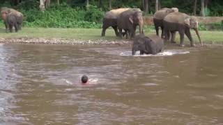 Olifantje komt verzorger te hulp