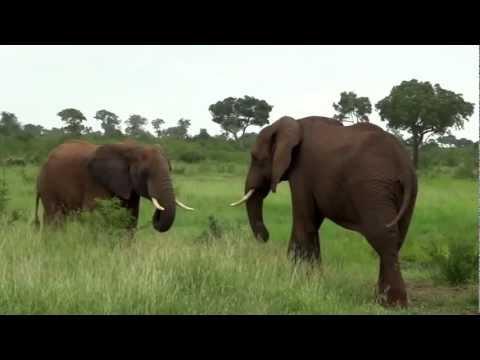 Elephants Playing – South Africa – flavionicodemos.blogspot.com/ – Instagram: @flavio_nicodemos