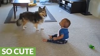 Baby can't stop laughing at hyperactive dog