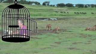 A Swingin' Safari - Bert Kaempfert / played by AlexTyros4