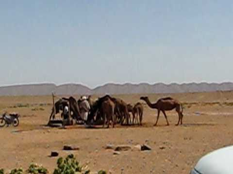 Sahara Desert: Camels drinking by a well 9/23/10