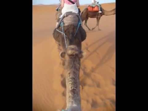 Randomly Recorded 117: Camel ride