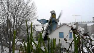 Le Courage des Oiseaux