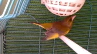 verderon  bueno y  unos pocos  nidos del 2011