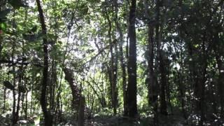 Terrifying Jungle Sounds in Manzanillo, Costa Rica!