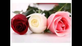 Lindas rosas para una belleza