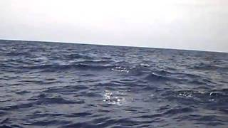 Málta felé vitorlázunk és jönnek a delfinek (www.meder.hu)