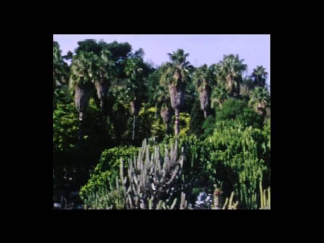 """Vídeo de la canción """"Ficus"""" de Oso Leone."""