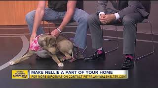 Pet of the week: Nellie is a 10-month-old hound mix who loves rides in the car