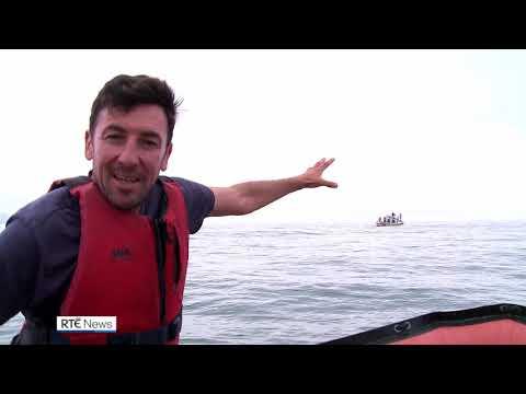 Feeding frenzy for humpback whales off Kerry coast
